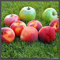 Ароматизатор Flavorah - Peachy Green, фото 1