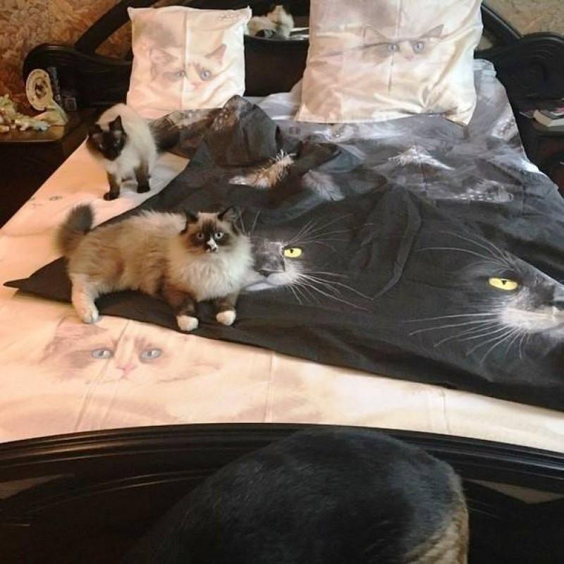 Комплект постельного белья  Ласка, поплин, разные размеры полуторный