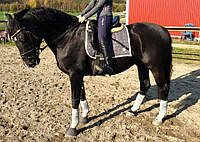 Бриджи для конного спорта Horze B Vertigo Kimberley Women's Proactive Full Seat Breech