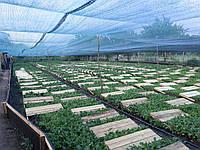 Бізнес-екскурсія на равликову ферму