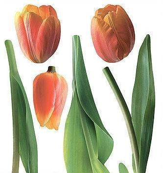 Наклейка, тюльпаны, красный, интерьерная Наш Декупаж