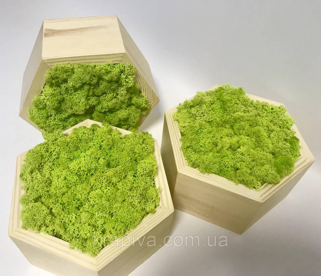 Полку 3 шт стільники зі стабілізованим мохом, кашпо мох, полку мох В НАЯВНОСТІ