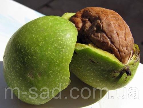 Грецкий орех Прикарпатский(двухлетний)тонкокорый, фото 2