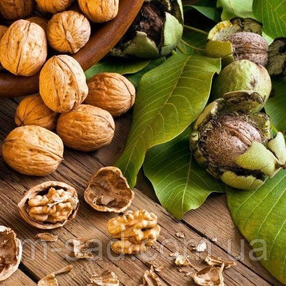 Грецкий орех Буковинский-1(тонкокорый)
