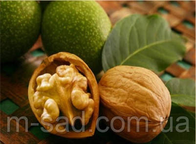 Грецкий орех Топоривский(двухлетний)вкусный