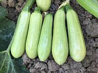 Семена кабачка EZ 38 F1 (1000семян) Libra Seeds (Erste Zaden)