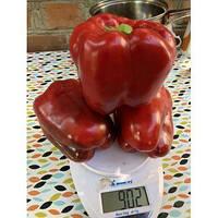Семена перца сладкого 1601 F1 (ранний) кубический (500 нас.) Lark Seeds