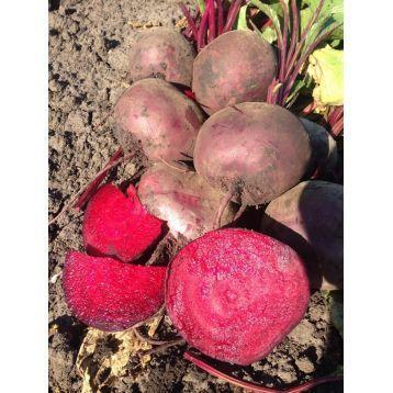 Купить Семена свеклы столовой Марун F1 (5000 семян) Lark Seeds