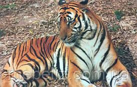 Ткань принтованная на подушки Tiger