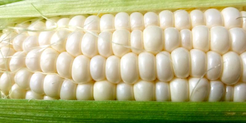 Насіння цукрової кукурудзи Андріївський 100 шт