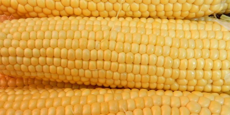 Насіння цукрової кукурудзи Багратіон 100 шт
