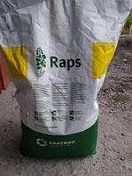 Семена озимого рапса Рекорди Saatbau Recordie