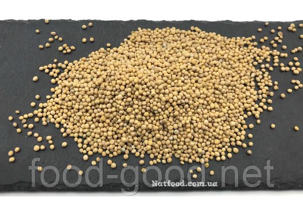 Горчица белая семена, 100г, фото 2