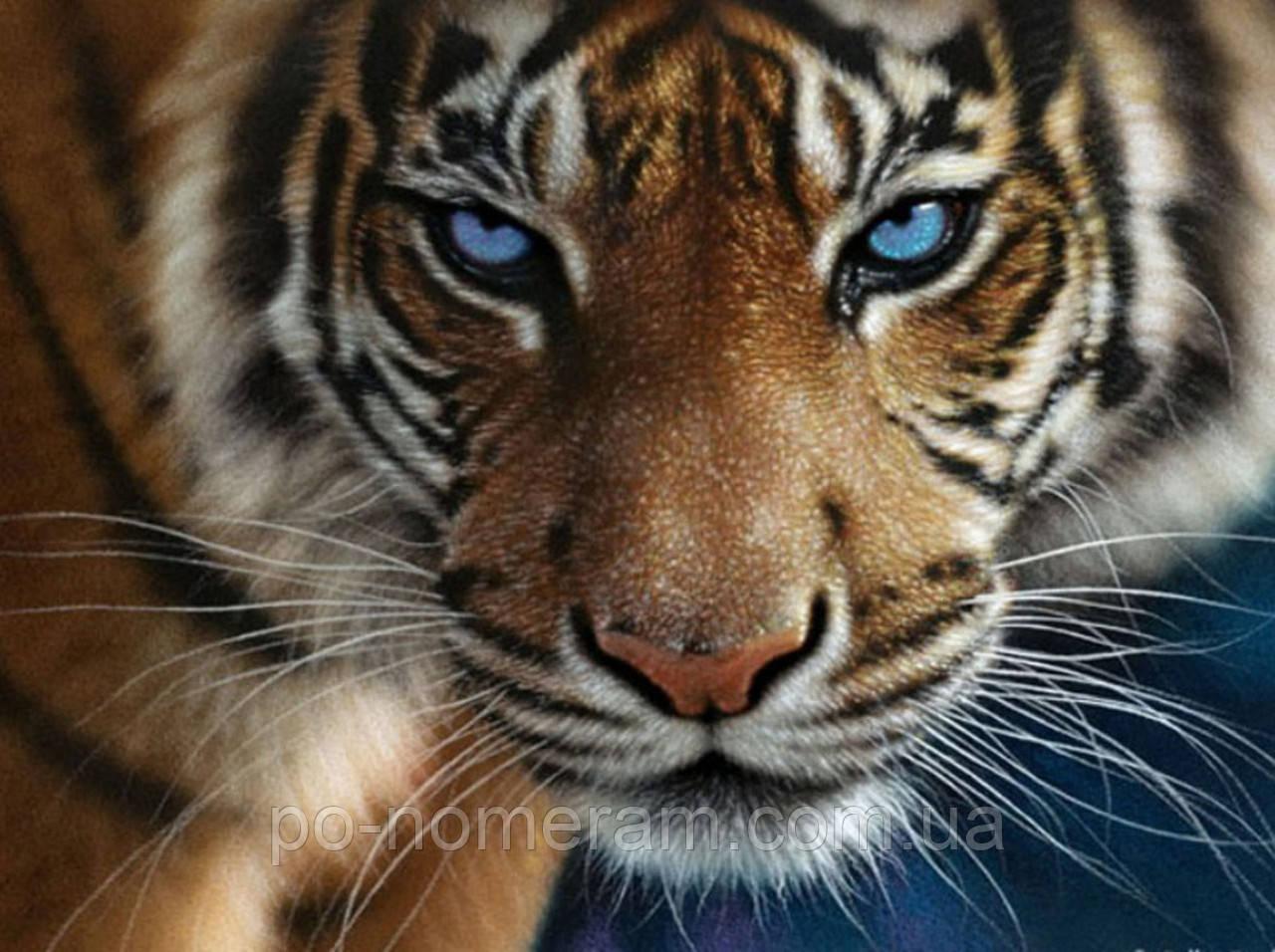 Рисование камнями на холсте Rainbow Art Взгляд тигра (PDB33) 30 х 40 см (На подрамнике)