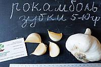 Рокамболь испанский зубки 5-10 грамм (10 штук) (слоновий чеснок семена) гигантский лук-чеснок, насіння часнику, фото 1
