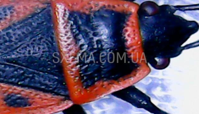 Микроскоп для насекомых