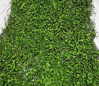 Искусственный травянистый Ковер 90*40 см, Ряска