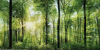 Фотообои Лес  № 26