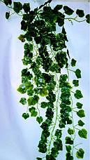 Свисающая зелень,кустовая зелень-виноград, фото 3