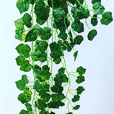 Свисающая зелень,кустовая зелень-виноград, фото 2