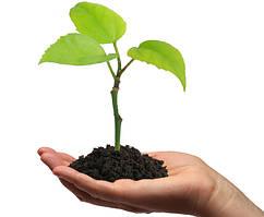 Товары для выращивания растений