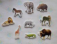 Африканские животные. Магнитики развивающие. Набор