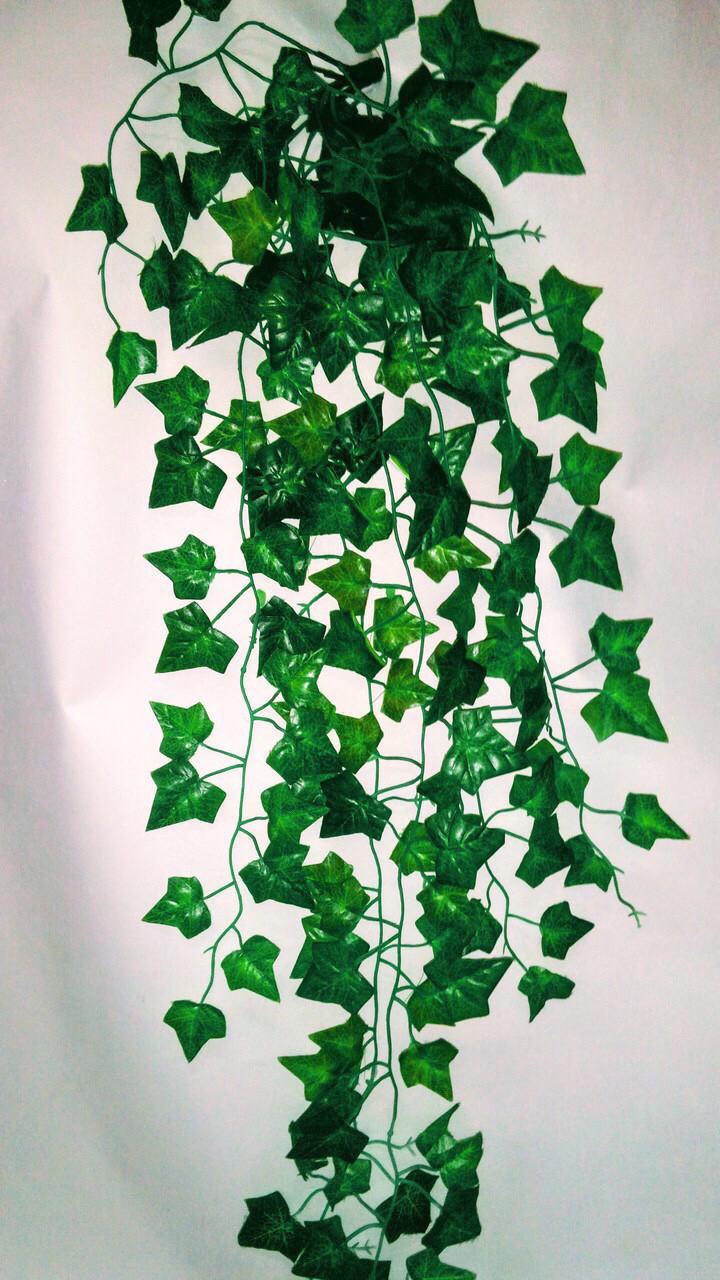 Свисающая зелень плющ