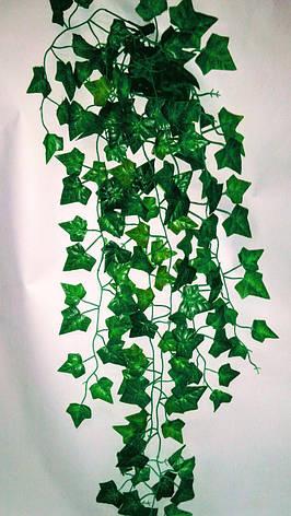 Свисающая зелень плющ, фото 2