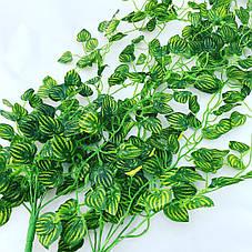 Свисающая зелень плющ, фото 3