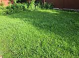 65грн/кг мешок 25кг Газон-Распродажа 2021 семена газонных трав оптом по низким ценам, фото 5