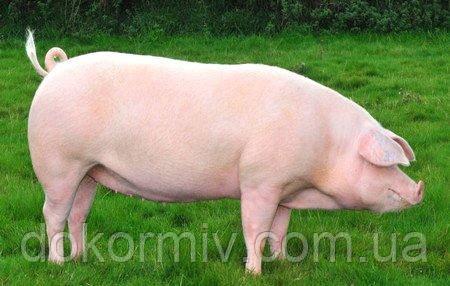 Премикс для свиней финиш 1%