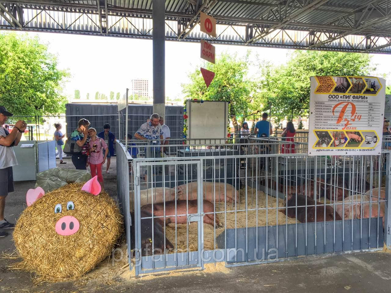 Наши свинки на АГРО-2019