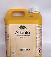 Atlante (Атланті), 5л