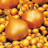 Лук репчатый-севок сорт Сеншуй средне-поздний для осеннего и весеннего посева округлой формы желтого цвета