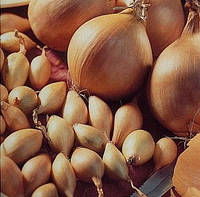 Лук- севок озимый Купидо (Эмир)т 1 кг в сетке 10 кг