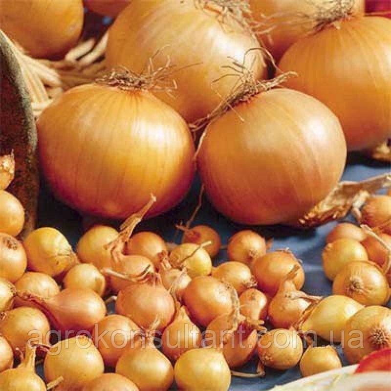 Озимый лук-севок Трой (БРОЕР, Голландия)