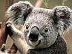 "Интeрнeт-магазин ""Koala"""