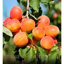 Концентрований сік абрикоса 25кг/упаковка