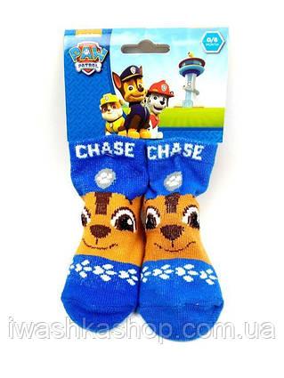 Синие носки Щенячий патруль на малышей 6 - 12 месяцев, Nickelodeon, Paw patrol