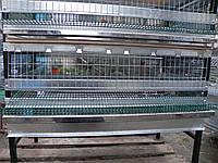 Клітка для перепілок несучок, фото 1