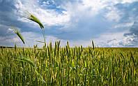 Фермерським господарствам України нараховано компенсацію у розмірі 81,4 млн грн