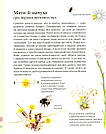 Експедиція з мурахою Софі. Автори Каста Стефан, Моссберґ Бу, фото 9