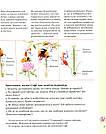 Експедиція з мурахою Софі. Автори Каста Стефан, Моссберґ Бу, фото 6
