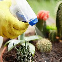 Как правильно опрыскивать комнатные растения