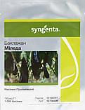 Миледа F1 10 шт семена баклажан Syngenta Голландия, фото 3