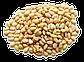 Кедровый орех 1кг Сибирь, фото 3