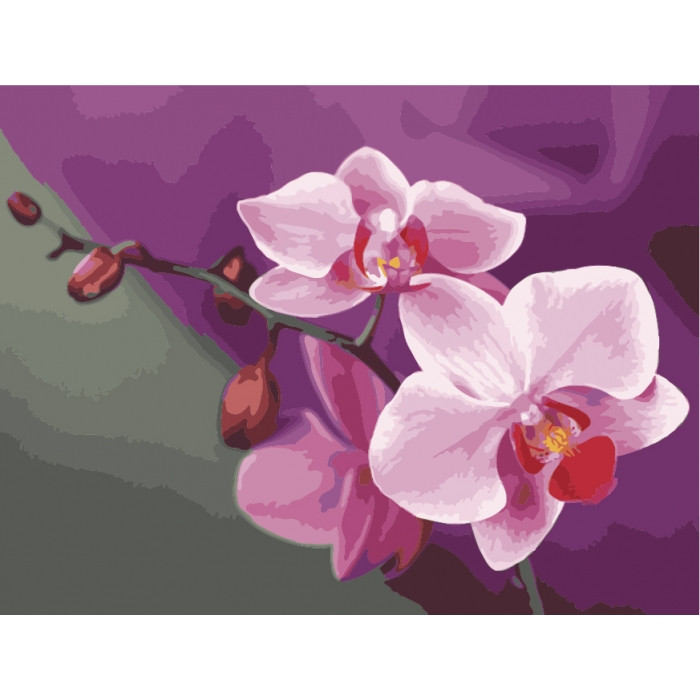 Картина по номерам.  Розовые орхидеи 40х50см арт. КНО1081