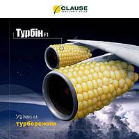 Ультраранний гибрид сладкой кукурузы Турбин F1, французской селекции Clause, проф упаковка 5 000 семян, фото 1