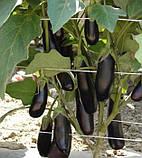 Дестан F1 насіння баклажан Enza Zaden, Голландія 10 г, фото 2