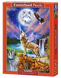 Пазл Castorland Wolf's Night, 1500 эл.